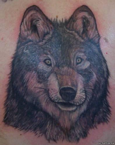 Татуировки волков фото татуировок